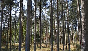 Helsegevinst fra skogen