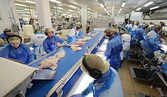 Under halvparten av arbeidstakerne i fiskeforedling er norske