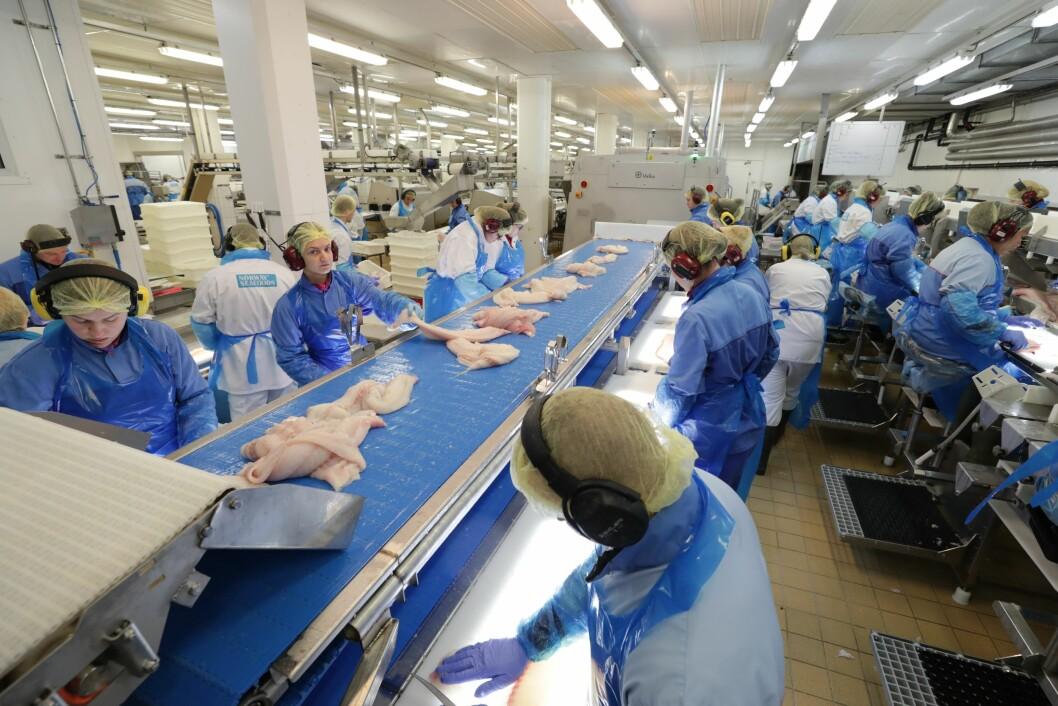 Stadig flere norske arbneidstakere forlater norsk fiskeindustri. Illustrasjonsfoto: Ole Åsheim