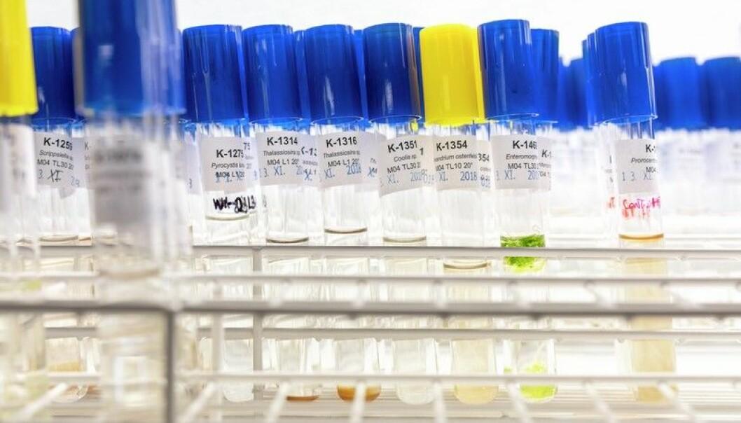 Det vil være svært viktig å komme tidlig ut med god informasjon om de aktuelle vaksinene når det kommer resultater fra kliniske studier, og når den første vaksinen blir godkjent, mener Forskningsrådet.