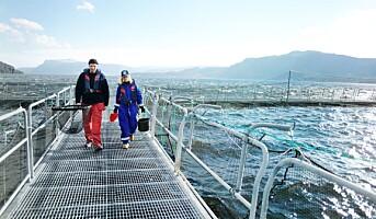Risiko-forståelse og håndtering i havbruksnæringen må bli bedre